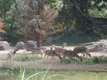 Magdeburger Zoo
